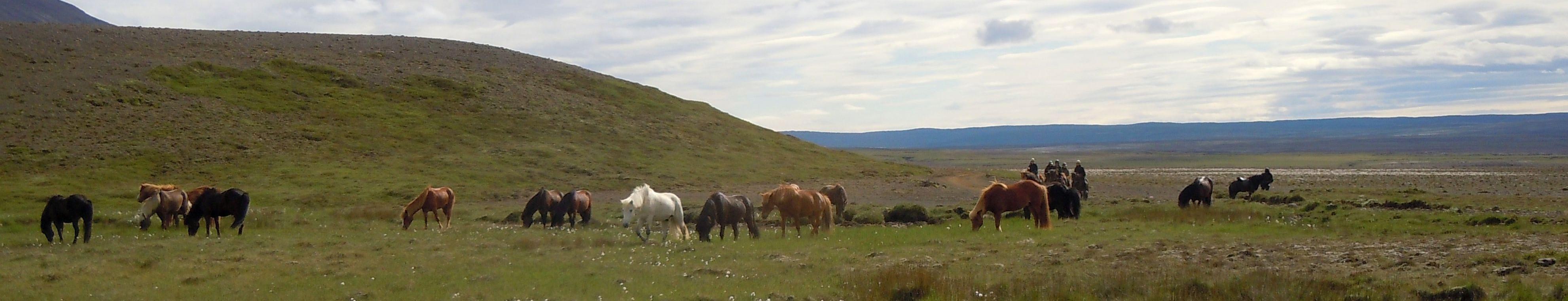 Pferdefrauen.de